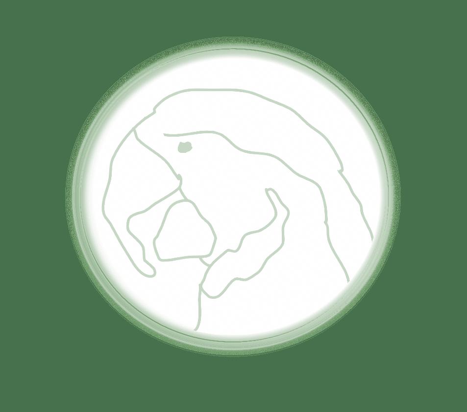 portrait laverdure rond